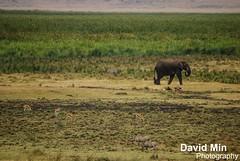 Ngorongoro Crater, Tanzania - Garden of Eden (GlobeTrotter 2000) Tags: africa travel wild lake elephant tourism nature animals garden tanzania wildlife visit ngorongoro crater zebra eden savannah arusha manyara tarangire safaris