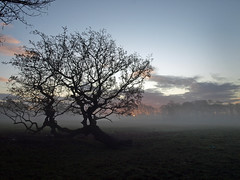 Morning has broken (Mr Grimesdale) Tags: liverpool morningmist merseyside stevewallace croxtethpark mrgrimesdale