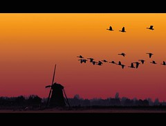 The essence of a dutch landscape - 2 (Wim Koopman) Tags: sunset holland tree mill netherlands windmill dutch grass birds photography flying geese photo magic horizon flock stock flight nederland meadow goose hour shrub grassland polder stockphoto stockphotography goudriaan wpk