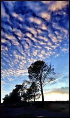 Wenyacan (Geo_grafics) Tags: city vegas blue sunset wild vacation usa color tree art nature colors clouds america landscape nikon colorful lasvegas nevada gimp sparkle photograph strip majestic geo anything 702 funnin photograghy geografics