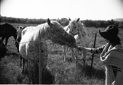 Let's make friends (threepinner) Tags: horse canon 50mm hokkaido ae1 tmax sigma   f28 hokkaidou  bibai northernjapan  400