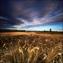 Field of Wheat - Zeiss Distagon T* 18mm Test Shot (angus clyne) Tags: sunset red cloud house tree skye field yellow canon fence river prime golden scotland october shoot angle angus path mark farm wheat wide perthshire scottish tay ii crop 5d strathmore isle hunt 2012 18mm clyne distagon ziess
