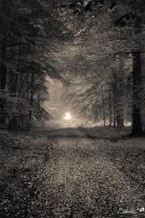 L'automne s'abat sur Hesdin  - Steve.© -