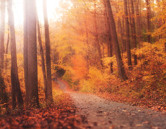 Autumn Light (Jack Wassell) Tags: autumn light sun fall leaves jack dof bokeh connecticut depthoffield monroe rays expansion lightrays brenizer wassell webbmountain