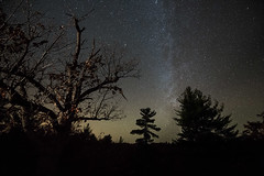 Just outside of town (tomms) Tags: trip trees light sky ontario canada dark stars streak north astro astrophotography
