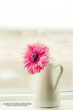 ربي تخليتُ عَن جميع الأمنيات مُقابل أن تكُون بجَانبي  [♥] (✿ SUMAYAH ©™) Tags: flower canon photography eos flickr explore pro وردة زهرة 550d زهور sumayah المصممةسوسي فلكرسمية فلكرسوسي صورزهور المصورةسمية سميةعيسى flickrsumayah المصورةسميةعيسى