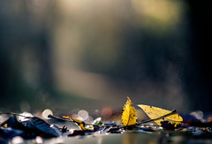 poems of the past (nardell) Tags: autumn fall nature leaves leaf bokeh fallen fallenleaves valleyforge shallowdof twoleaves valleyforgestatepark fall2012