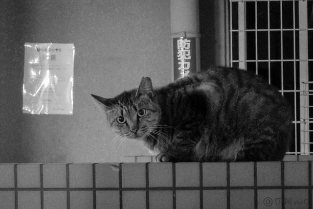 Today's Cat@2012-10-25