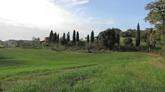 """Petroio  21-10-2012_008 (Bludipersia) Tags: italien trees vacation italy panorama tree verde nature field landscape landscapes italian flickr italia wheat country natura landmark hills campagna tuscany poppies land campo toscana toscane landschaft paesaggi paesaggio colline collina toskana tuscan naturesfinest hill"""" """"green bludipersia europefarm """"paesaggi toscani"""" stheunforgettablepictures"""