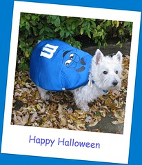 """10/12B ~ """"Halloween is almost here"""" (ellenc995) Tags: blue friends halloween riley westie westhighlandwhiteterrier mm coth supershot akob abigfave citrit pet100 concordians thesuperbmasterpiece 100commentgroup yearofholidays ayearofholidays challengeclub coth5 naturallywonderful 12monthsfordogs12 thesunshinegroup challengeclubchampion"""