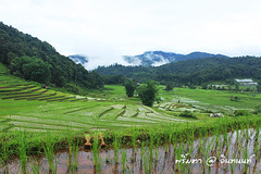 PhamonVillage-DoiInthanon-ChaengMai-Trip_By-P r i m t a a_E10886166-019