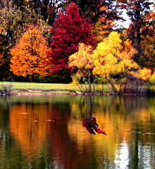 Autumns Falling Leaves (ebonique/ANJELIQUE) Tags: legacy pictureperfect cherryontop supershot flickrsbest flickrdiamond citrit overtheexcellence awesomepictureaward