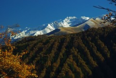 Bouirex (Ariège/Pyrénées) (PierreG_09) Tags: montagne neige arbre forêt pyrénées pirineos ariège couserans bouirex sentenacdoust