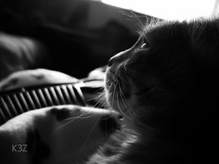 "6/365 ""High Hopes"" (K3Z Photos) Tags: blackandwhite animals cat photography flickr sony kitty cybershot pointandshoot knuckles compact knucks hopecatkittyknucksknucklesphotographyflickrblack whihope"