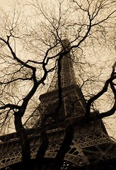 The Eiffel Tower in Sepia (Rob Skerman) Tags: paris france tree sepia europe eiffeltower upshot robertskerman