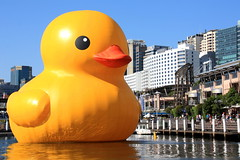 Giant yellow floating duck (CarlosSilvestre62) Tags: sydney australia rubberduck yellowduck sydneyfestival darlingharboursydney floatingduck giantyellowduck carlossilvestre62 2013sydneyfestival darlingharbouryellowduck