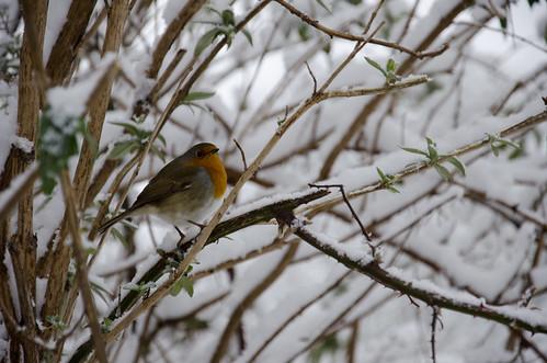 Winter bird 1 ©  Still ePsiLoN