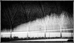 "Bare Naked Trees (James A. Crawford - ""Crawf"") Tags: california longexposure trees wallpaper blackandwhite bw usa white abstract tree art texture nature photoshop canon landscape eos blackwhite losangeles creative calif textures cal pro richardmeier gettycenter canoneos unforgettable blackdiamond digitalphotography edges jpaulgetty jpaulgettymuseum longexposures losangelescounty blueribbonwinner vividimagination creativephotography justimagine cs5 efex colorefexpro jpaul niksoftware creativedigitalphotography flickraward theunforgettablepictures creativepostprocessing expessionism gnneniyisithebestofday colorefexpro3 blackdiamondpremier silverefexpro flickraward5 flickrawardgallery extraordinarilyimpressive colorefexpro4 imageborders magicmomentsinyourlifelevel2 magicmomentsinyourlifelevel1"