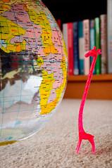 Home (MegaPixel Panda) Tags: world africa macro home toy carpet globe nikon earth inflatable giraffe bookcase d90 nikond90