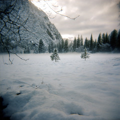 they danced in a gallery of frost (Super G) Tags: california trees winter mist snow mountains color film fog clouds yosemitenationalpark portra400 photoworkssf filmforfriday