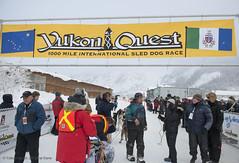 YUKON QUEST 2013 (The Yukon Quest) Tags: winter canada cold ice dogs animal alaska frozen mush north arctic yukon sledding 40 northern mushing sled endurance dogsledding dogsled yukonquest 2013