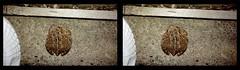Mr. Grumpy Visits 2 - Crosseye 3D (DarkOnus) Tags: mr grumpy toad pennsylvania buckscounty huawei mate 8 cell phone 3d stereogram stereography stereo darkonus closeup macro hyperstereo hyper extreme ttw fowlers crossview crosseye