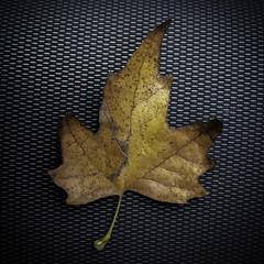 Memorie minime (Lumase) Tags: leaf dryleaf square texture surface fabric onblack