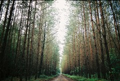 straight on (Niek...) Tags: countryside canon fuji film analog ae1 woods forest nature morning mood path trees color 28mm outdoor