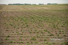 Anglų lietuvių žodynas. Žodis agricultural reiškia a agrokultūrinis lietuviškai.