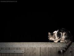 Grumpy Cat (Richard Walker Photography) Tags: grumpy cat pet