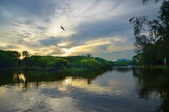 DSC_8297 (kin hoong2013) Tags: clouds outdoor shah alam shahalam nikon nikond7000 d7000 bird sky tasik lake landscaps nature sunset malaysia water garden