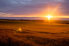 sunset_field_walking_3961-6 (allybeag) Tags: sunset fields solway cumbria crosby