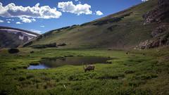 alpine lunch (PhotographyBum) Tags: rmnp nps colorado trail ridge road elk alpine outdoor landscape canon wide 24mm grassland field hill mountainside mountain foothill
