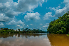 Riu Sanga (faltimiras) Tags: camerun cameroun rca republica centre africana pigmeu pigmeo bayaka bayaca elefant selva jungle forest elefante elephant gorila africa