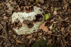 Bad Robot (Herr Olsen) Tags: schrott rost rust verwittert boden wald maske laub mask iseefaces pareidolie weathered