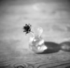 Flower in a vase (Nils Kristofer Gustafsson) Tags: blackandwhite bnw ishootfilm retro rollei 400s lomo lomography sweden rebro keepfilmalive filmisnotdead filmphotography film rodina adonal kiev 6c vega125 mediumformat medium format