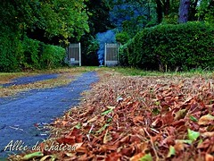 2016-09-02 evening  walk (12)alle du chteau (april-mo) Tags: countrylife countryside autumn fall landscape farming france franceimage nord wood autumncolors deadleaves feuillesmortes