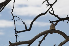 Happy Friday #nikon #bird #tgif #travel #nature (billtrego) Tags: nikon bird tgif travel nature