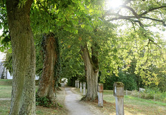 Along the path (siebensprung) Tags: kloster weltenburg kelheim bume allee trees kreuzweg path