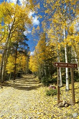 Rough Road to Tincup (Patricia Henschen) Tags: chaffeecounty sawatch range mountains mountain aspen autumn fall color gold silver mine mines mining ruins ghosttown stelmo mtprinceton chalkcreek nathrop colorado canyon sanisabelnationalforest leafpeeping fallcolor pathscaminhos county road backroad
