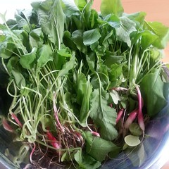 Radishes from the green house
