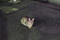 Today's Cat@2016-09-26 (masatsu) Tags: cat thebiggestgroupwithonlycats catspotting pentax mx1