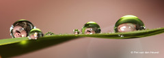 Droplet Fear (pim van den heuvel) Tags: original macro by canon lens ojo see drops funny you fear den drop 100mm oeil pim refraction droplet another van gota ogen auge occhio mata tropfen oog druppel heuvel goccia gz ga   gouttelettes   damlas tetesan