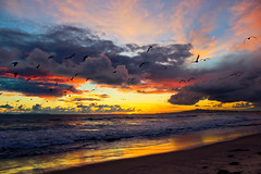 (OrangeCounty_Girl) Tags: california above sunset sky sun beach nature beautiful up clouds america canon photography coast seaside amazing sand gorgeous scenic calming peaceful pacificocean coastal orangecounty oc westcoast seashore epic huntingtonbeach laplaya hb 714 surfcity bolsachicastatebeach fickr fallweather 92647 fallday ocgirl orangecountygirl hollyclark