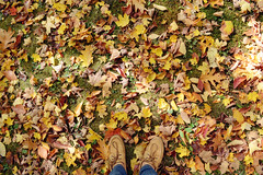 day 190/365 : like the colors of autumn, so bright before they lose it all. (sharonswonderland) Tags: autumn fall colors leaves photography shoes mine seasons ground changing day190 sperry 365days topsider