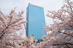 (SILENCE Vincent) Tags: city japan   cherryblossom  sakura osaka   osakaprefecture