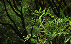 Japanse-tuin-1 (Don Pedro de Carrion de los Condes !) Tags: park nature japan groen wandelen herfst jardin denhaag bamboo tuin fx donpedro japans typique clingendael typisch landgoed japansetuin haags haagje landgoedclingendael d700 hethaagje