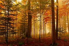 Macolin sur/Bienne (jd.echenard) Tags: wood autumn trees light mist color fall nature forest automne licht smog nikon nebel lumire herbst autumncolors arbres otoo leafs wald bltter autunno bume brouillard couleur fort feuilles brume sousbois lueur mfcc seeland herbstfarben macolin magglingen autumnmood supershot 2035mmf28 cantondeberne switzerlandcountry d300s ambianceautomnale flickrsfinestimages1 bestevercompetitiongroup atmosphereautomnale macolinsurbienne communedevilard
