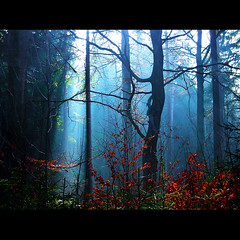 suddenly light in the forest ( Peter Grahlmann ) Tags: blue trees nature leaves misty germany silhouettes fairy frame magical photomix creativephotocafe
