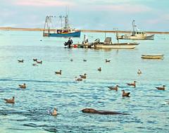 Cape Cod Americana Chatham Fish Pier View (Profcjgregory) Tags: chatham cape cod